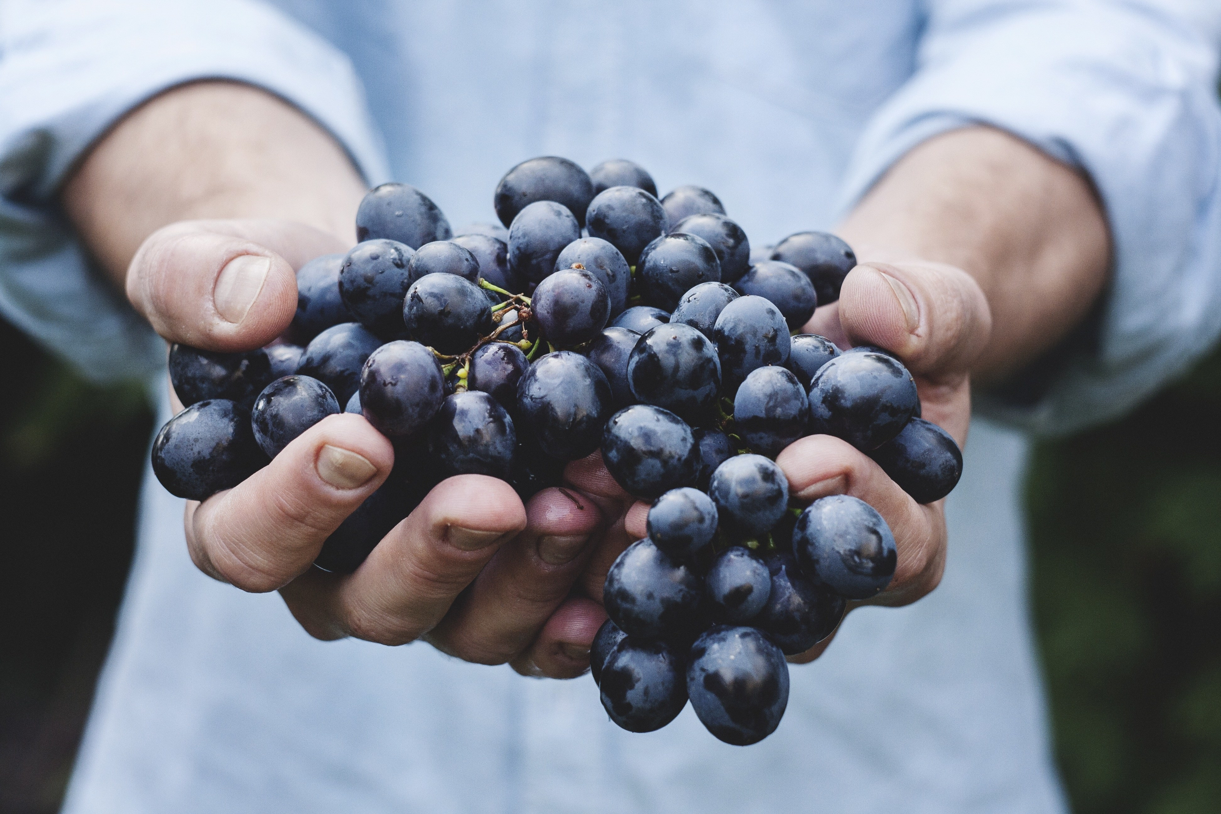 Grapes and healthy food for skin